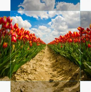 Canvas Tulp 03