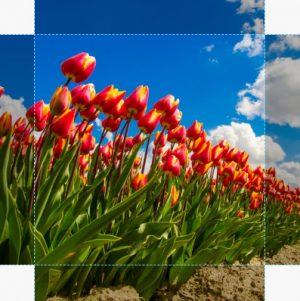Canvas Tulp 04