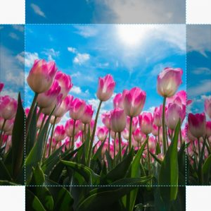 Canvas Tulp 06