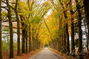 Landweg in de herfst