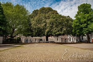 Postzegelboom Paleis Noordeinde Den Haag