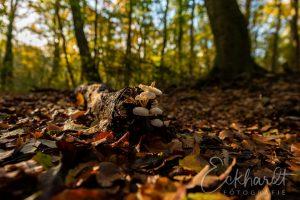 Paddenstoelen in het bos 01