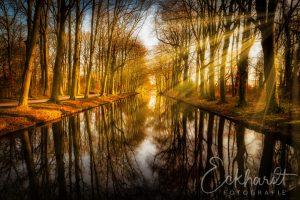 Zonneharpen in het bos bij zonsopkomst